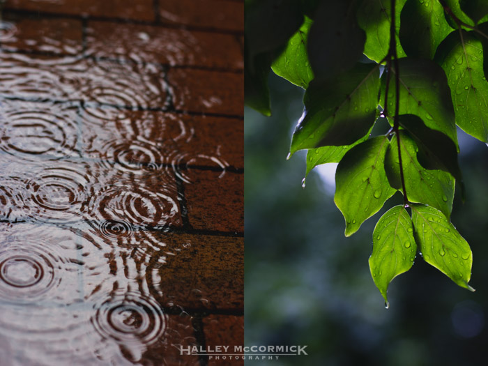 Raindrops-leaves